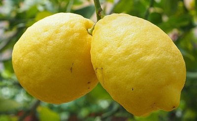 citrom-400-1482738535.jpg