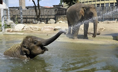 elefantok-bp-zoo400-1440074064.jpg