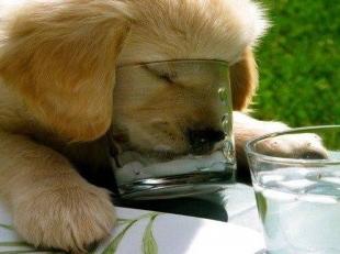 kutyameleg-1371287529.jpg