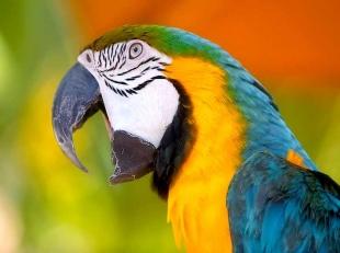 parrot1-1360063579.jpg