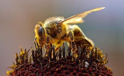 pollent-gyujto-meh400-foto-jon-sullivan-1415555033.jpg