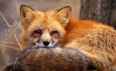 roka-fox15-400-1381075814.jpg