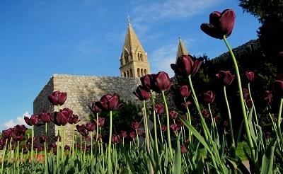 tulipecs1-1380858253.JPG